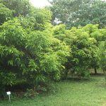 ORCHARD & SILVICULTURE